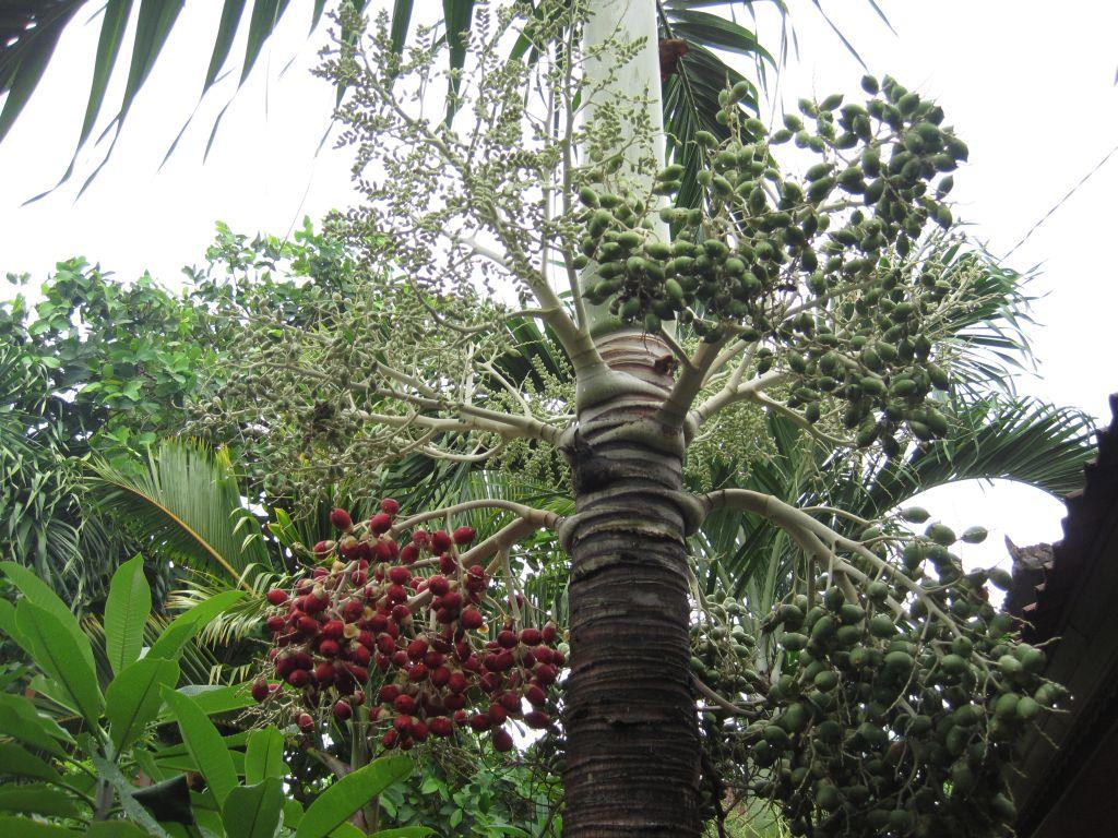 ein interessanter Baum in Guesthaus-Innenhof