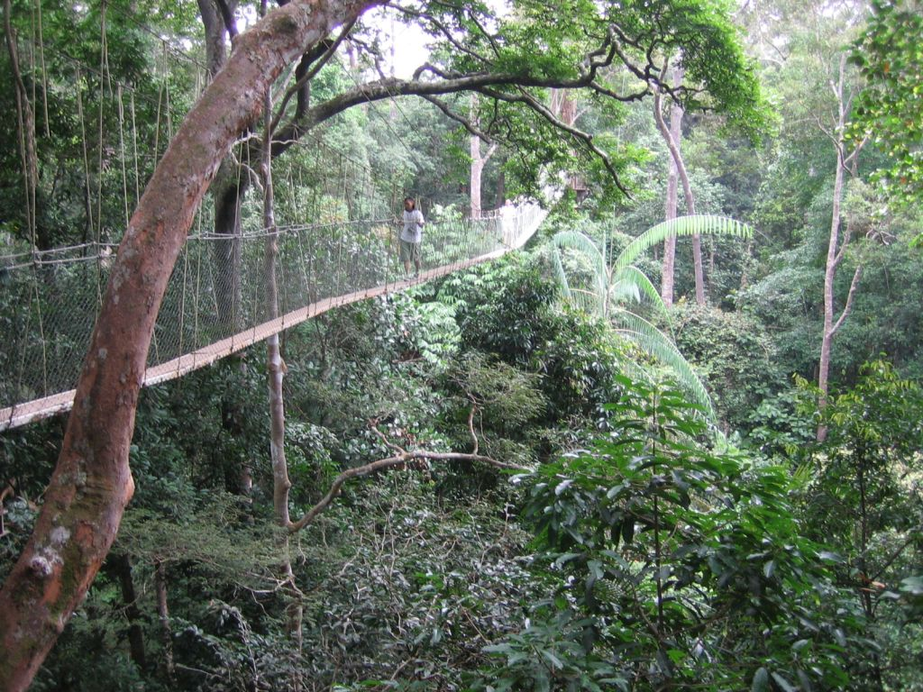 auch dieser Canopy-Walkway im Negara-Dschungel war vor mir nicht sicher