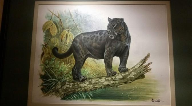 Schön und gefährdet: Wildkatzen präsentiert von Hermès