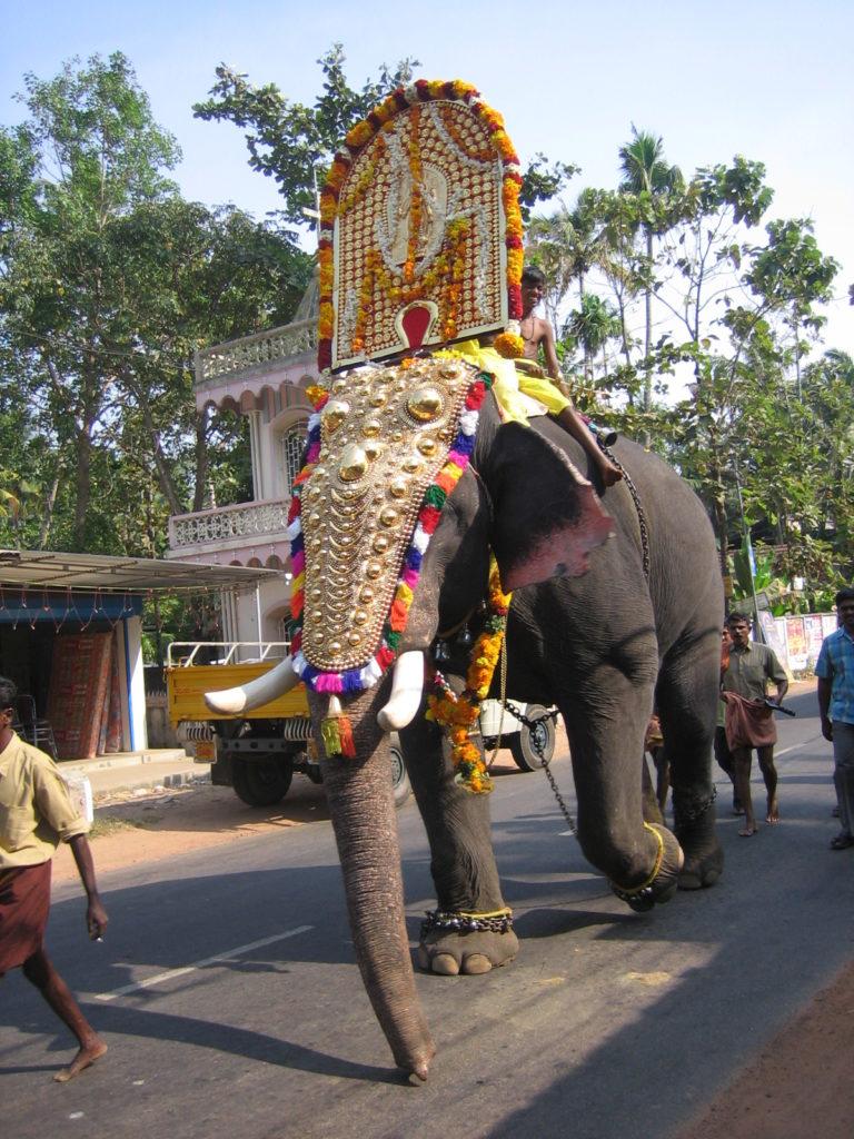 Elefantenfestival in Kerala