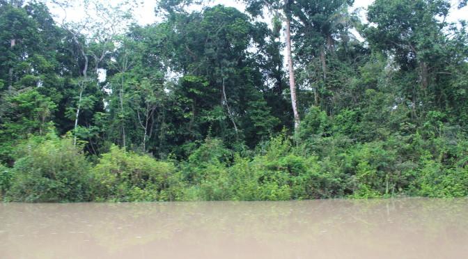 Vom Amazonas-Dschungel umschlungen