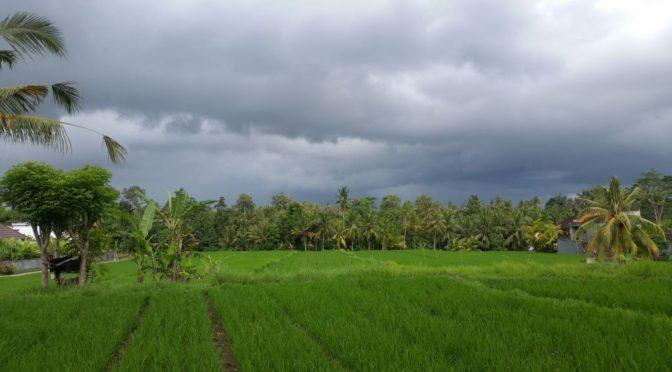Bali-Tips: Schnorcheln bei Amed, Wandern in Munduk, Live-Musik in Ubud