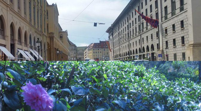 Der Traum von Gärten statt Autostau