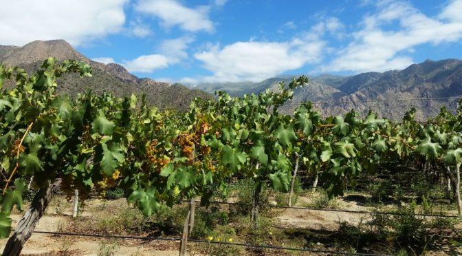 Wein, Männer-Gesang und atemberaubende Fels-Formationen in Bolivien und Argentinien