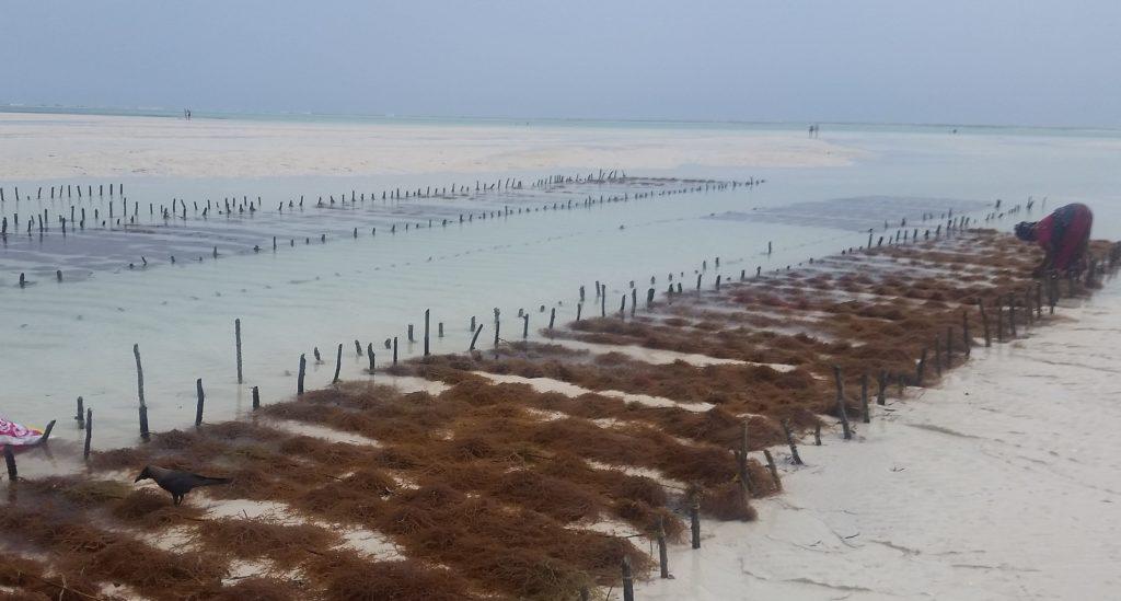 Watt bei Jambiani, Sansibar